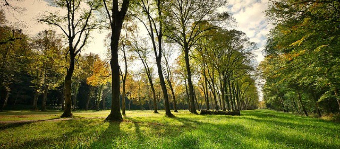 פארקים למשפחות בנופש